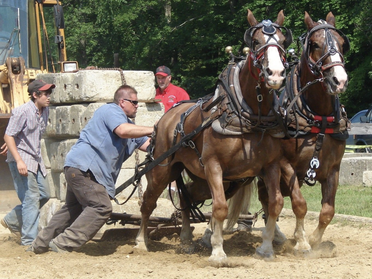 The Belgian Draft Horse And How You Can Work Better Together Joe Sweeney